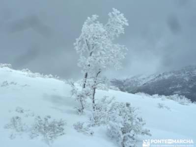 Hayedo de Montejo - Cuerda de la Pinilla; Power Walking; rutas de montaña por madrid